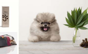 cbd-products-for-dogs